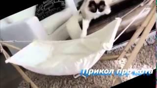 Кот играет  сигрушкой в гамаке