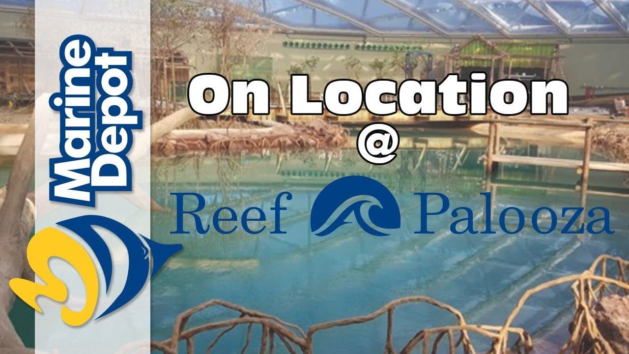 Julian Sprung: Little Stories 2 - 2017 Reef-A-Palooza California Thumbnail