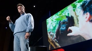 How to restore a rainforest - Willie Smits