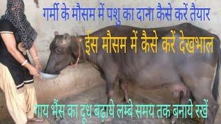 गर्मी के मौसम में गाय भैंस का दूध बढ़ाने के लिए दाना तैयार करें /garmi m Buffalo milk badhaye