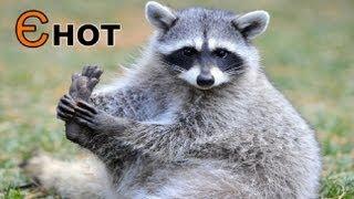 Назви тварин для дітей: вчимо абетку.