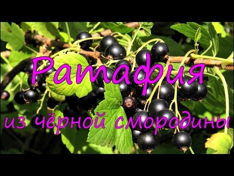 Ратафия из черной смородины.