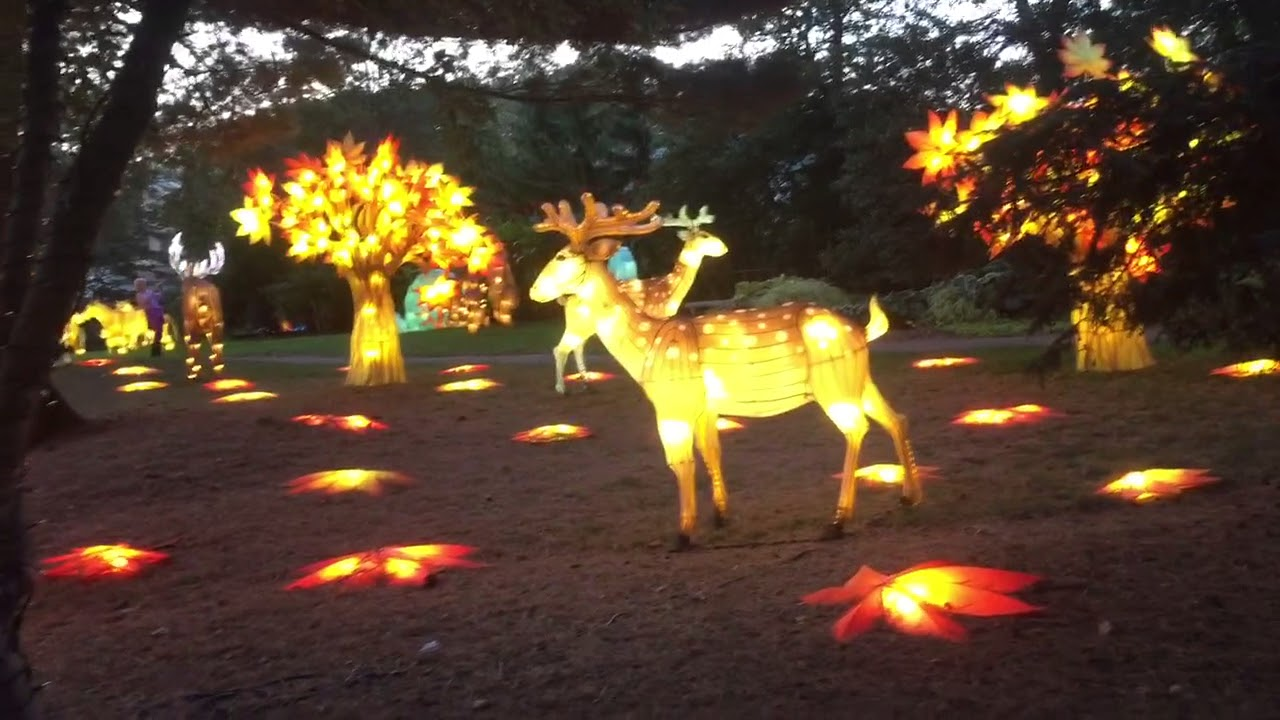 luminous nights at the toledo zoo so beautiful