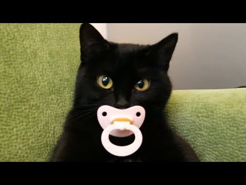 Funny Cats - Funny Cute Kittens Video Vines 2017