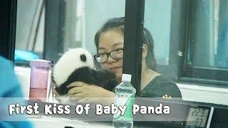 飼育員のメイさん、赤ちゃんパンダのファーストキスを奪うシーンが撮影されていた