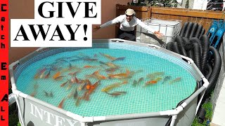 GIVING AWAY ALL My PET FISH!