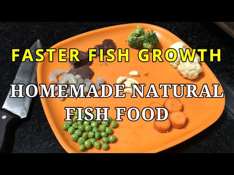 Homemade Fish Food For Goldfish | Best Food  For Goldfish To Grow Your Fishes Faster