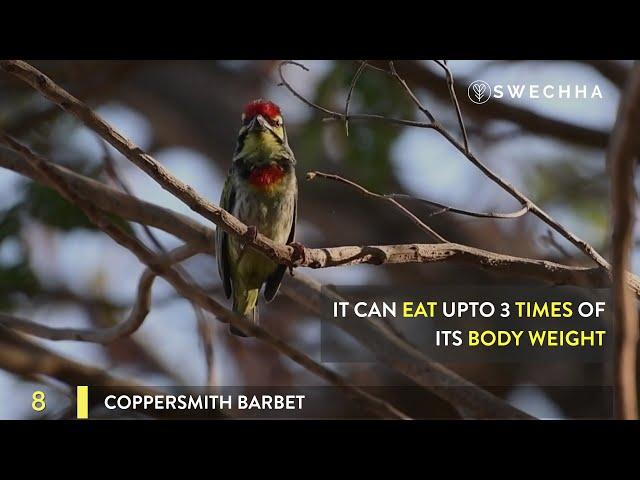 Eleven (11) Common Birds of New Delhi