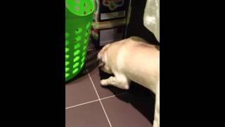 Pug Intelligence