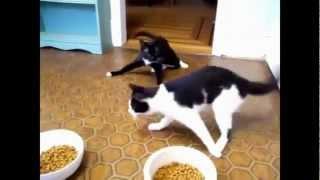 Pijane Koty 2013 - Drunk Cats very funny