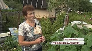дачники региона могут зарабатывать на излишках овощей со своего участка с помощью заготпунктов