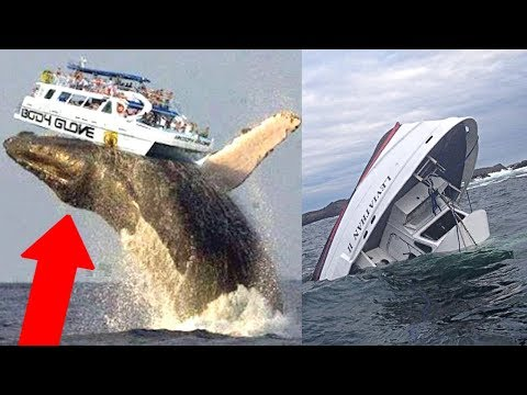 10 Moments You Wouldn't Believe If They Weren't Recorded!