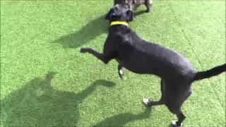 Dogs Trust Manchester - Poppy