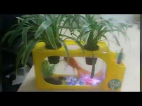 Bể Cá Cây Cảnh HCM