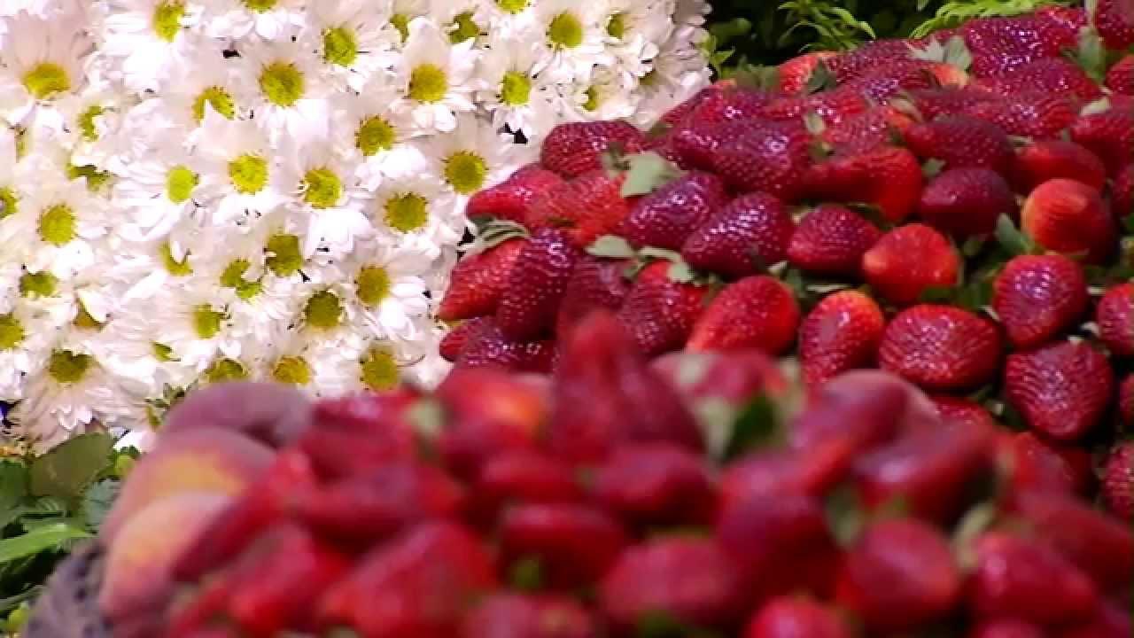 Resultado de imagem para Produtores de flores e morangos de Atibaia