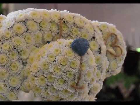 Флористика. игрушка из цветов мишка-тедди