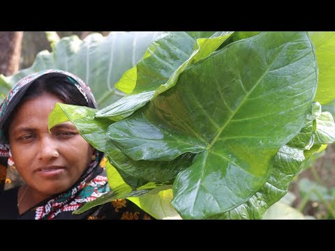 Village Food Farm Fresh Taro Leaf Recipe Healthy Foods Green Taro Leaves & Puti Mach Cooking