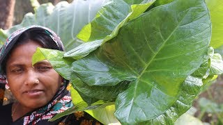 Village Food Farm Fresh Taro Leaf Recipe Healthy Foods Green Taro Leaves & Puti Mach Cooking