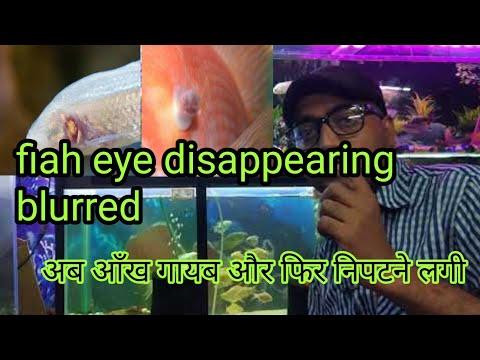 Fish Eye Disappearing And Blurred मछली की आँख गायब क्यों