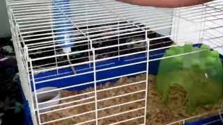 How I Set Up My Bunny Cage!!