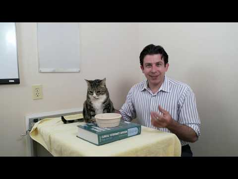 How to care for an older cat Part 2 of 3