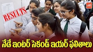 AP Intermediate 2nd Year Results Will be Out at 3.PM Today - Andhra Pradesh News | YOYO TV Channel