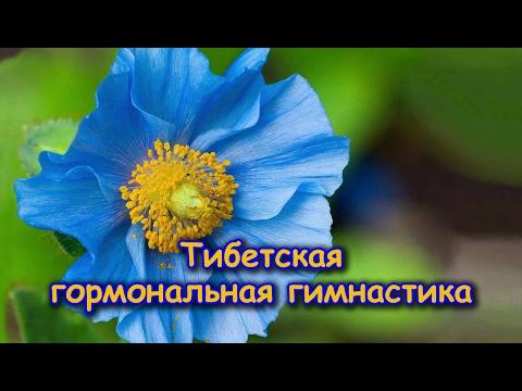 Тибетская гормональная гимнастика Орловой Ольги Львовны