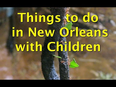 Things to do with Children in New Orleans - Audubon Butterfly Garden and Insectarium