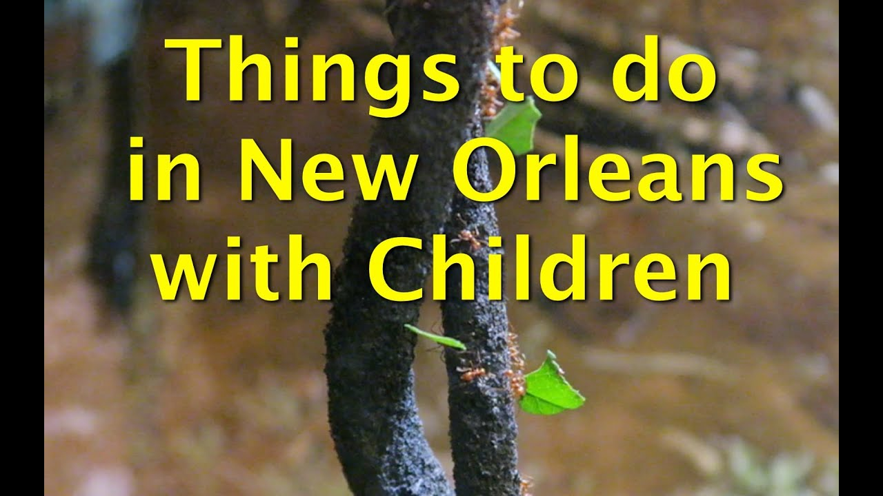 Things to do with children in new orleans audubon for Things not to miss in new orleans