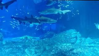 부산 씨라이프 상어수조 하이퍼 랩스 pusan seal…