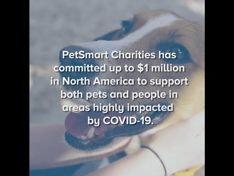 Petsmart Charities Commits Up To 1 Million In Support Of Animal
