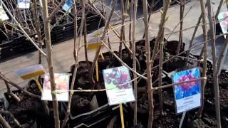 видео мичуринский сад тимирязевская академия продажа