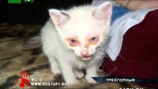 Котенок выжил после смыва в унитазе