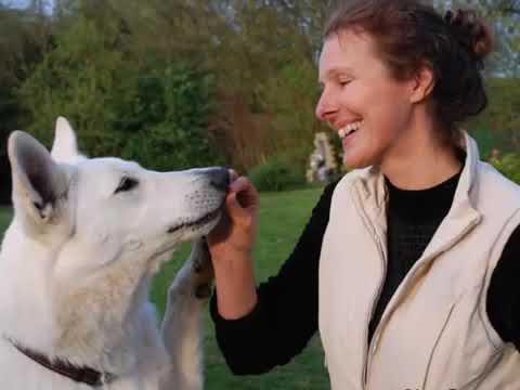 La Communication Intuitive Avec Les Animaux Change La Relation Avec Eux à 100%