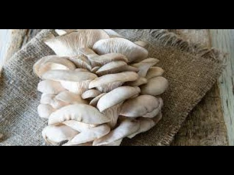 the health benefit of oyster mushrooms