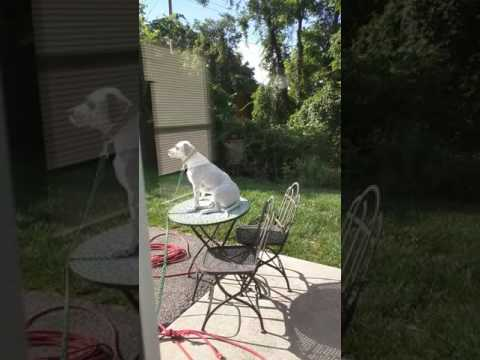 My rescue pup just recently started doing this when left outside