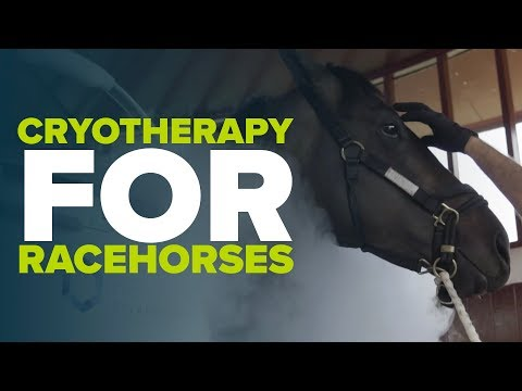 HORSE ICE CHAMBER | Cryotherapy used in the recovery of racehorses