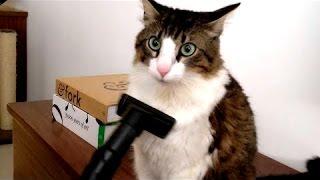 Плановая уборка кошек - Смешные и прикольные кошки очищаются пылесосом!
