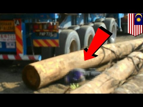 Workplace accidents: Malaysian lorry driver crushed by logs - TomoNews