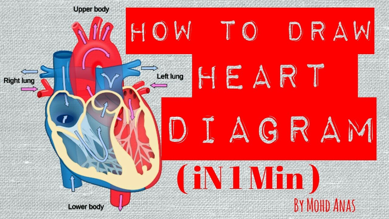 How To Draw Diagram Of Heart In One Minute Youtube