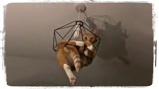 СМЕШНЫЕ КОТЫ (приколы с животными) | FUNNY CATS (fun with animals) #591