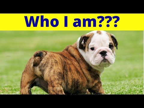 Can You Name These 12 Dog Breeds ???