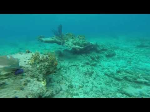 Bahamas Spearfishing World Record Cubera Snapper
