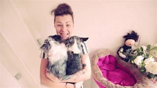 видео Уход за шерстью маленькой собаки