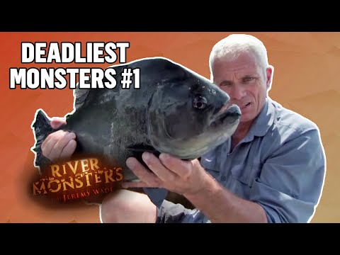 Deadliest Monsters #1 | COMPILATION | River Monsters
