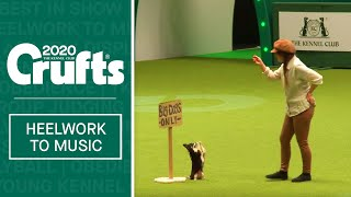 Adorable Chihuahua performs to Les Miserables | Crufts 2020
