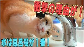 猫が風呂場の水を好きな衝撃的な理由が判明したらしい…! thumbnail