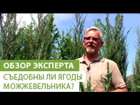 Мать-и-мачеха - лечебные свойства и применения травы
