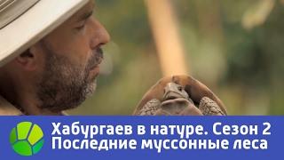 Последние муссонные леса  Хабургаев в натуре  Сезон 2 | Живая Планета