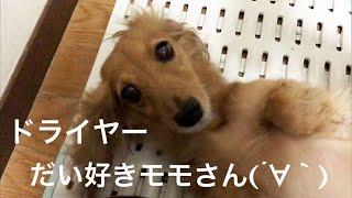 モモさんサッパリきれいになりました〜( ´∀`) しかしモモはホントにお...